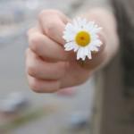 a-daisy-1309932